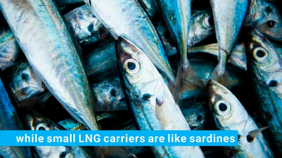 Small vs Big LNG carriers- sardines and whales #LNG